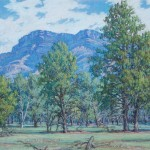 Pines of Wilpena